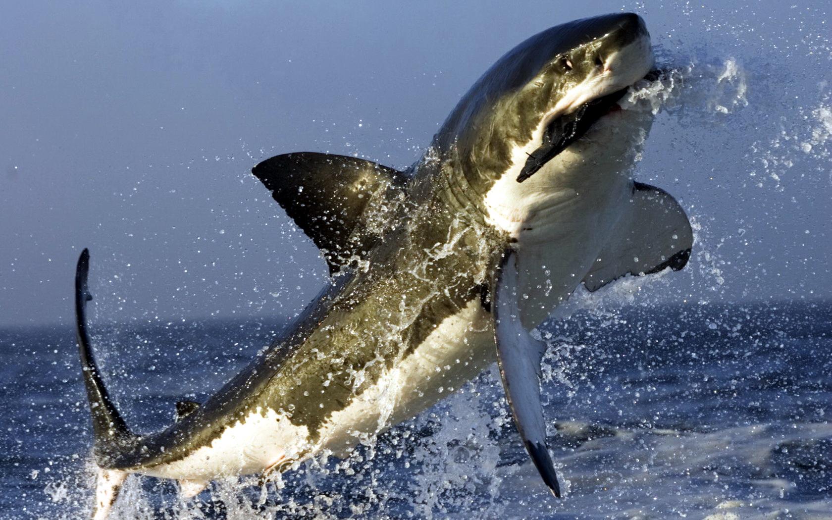The Shark Rule