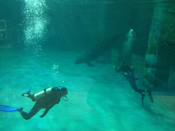 Ryan Avery Scuba Diving